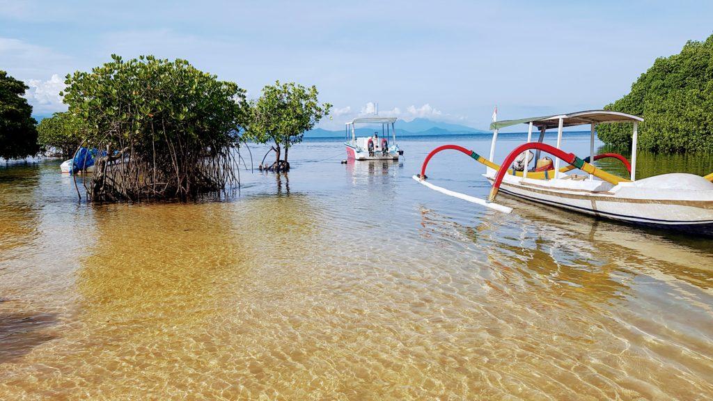 Mangrovy u pobřeží